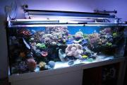 Vortrag: Quo vadis - Meerwasseraquaristik?